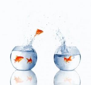 Goldfish changing bowls