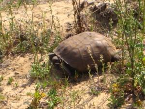 Turtle Florida