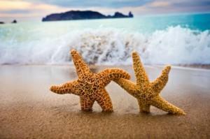 star fish dancing iStock_000005076340XSmall